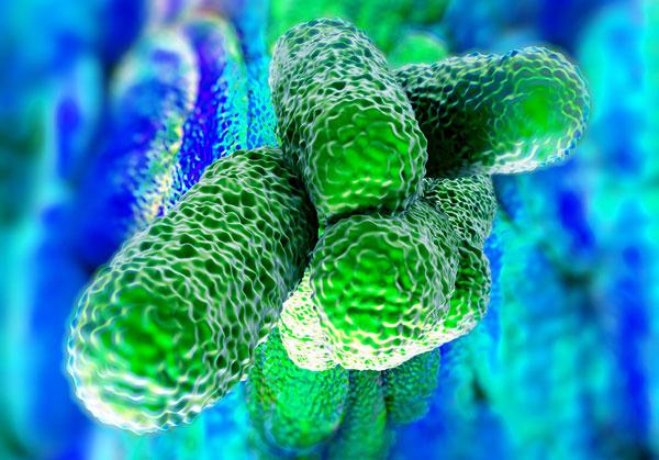 Legionnaires Bacteria